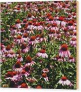 A Field Of Echinacea Wood Print