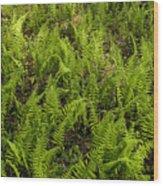 A Field Of Ferns Wood Print