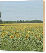 A Field Of Smiles Wood Print