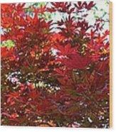 A Fiery Breeze Wood Print