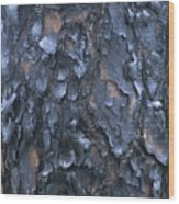 A Fire Scarred Tree Trunk Whose Thick Wood Print