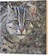 A Fishing Cat Portrait Wood Print