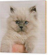 A Fistfull Of Kitten Wood Print