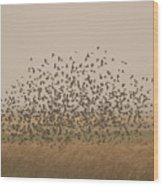 A Flock Of Birds Swarming A Field Wood Print