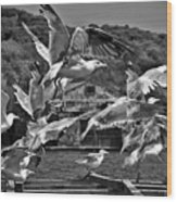 A Flock Of Seagulls Flying High To Summer Sky Wood Print