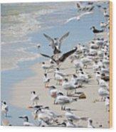 A Flock Of Seagulls Wood Print