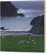 A Flock Of Sheep Graze On Seaweed Wood Print