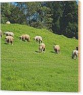 A Flock Of Sheep Grazes On Lush Grass Wood Print