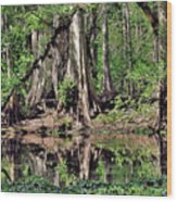 A Florida Riverine Forest 2 Wood Print