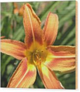 A Flower At The Farm Wood Print