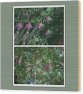 A Flys View Of A Flower  Wood Print