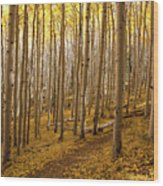 A Forest Of Aspens Wood Print