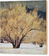 A Forgotten Winter Wood Print