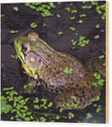 A Frog's Reflection Wood Print