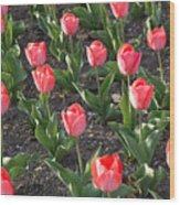 A Garden Full Of Tulips Wood Print