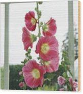 A Garden Greenhouse - Hollyhock Wood Print