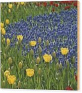 A Garden Of Colorful Tulips And Grape Wood Print