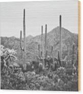 A Gathering Of Cacti Wood Print