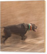 A German Shetland Hunts For Pheasant Wood Print