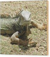 A Glaring Common Iguana On Aruba's Wild Side Wood Print