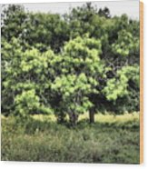 A Glimpse Of Nature Wood Print