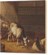 A Goat And Two Sheep In A Stable Wood Print