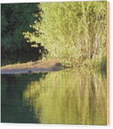 A Golden Reflection Wood Print