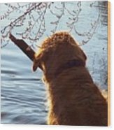 A Golden Retriever And His Stick Wood Print