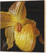 A Golden Slipper Wood Print