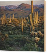 A Golden Sonoran Evening  Wood Print