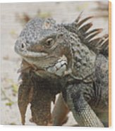 A Gray Iguana With Spines Along It's Back Wood Print