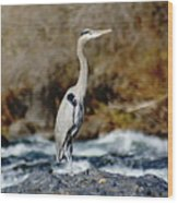 A Great Blue Heron At The Spokane River 2 Wood Print