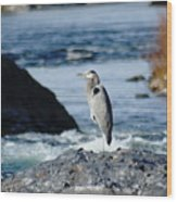 A Great Blue Heron At The Spokane River Wood Print