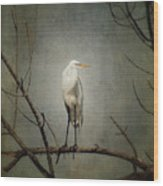 A Great Egret Wood Print