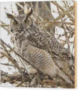 A Great Horned Owl's Wide Eyes Wood Print
