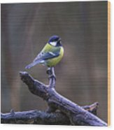 A Great Tit In The Rain Wood Print