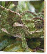 A Green Chamaeleonidae Wood Print