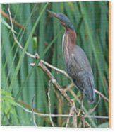 A Green Heron By The Canal Wood Print