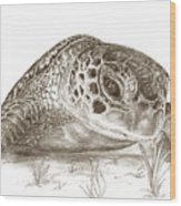 A Green Sea Turtle In Earthtones Wood Print
