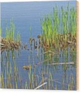 A Greening Marshland Wood Print