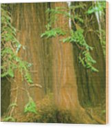 A Group Giant Redwood Trees In Muir Woods,california. Wood Print