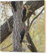 A Group Of Acorn Woodpeckers In A Tree Wood Print