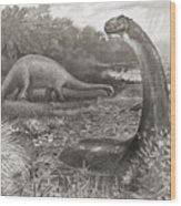 A Group Of Brontosaurs, Or Thunder Wood Print