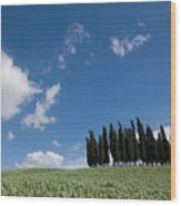A Group Of Cypress Trees Dot A Tuscan Wood Print