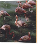 A Group Of Flamingos At The Folsom Wood Print