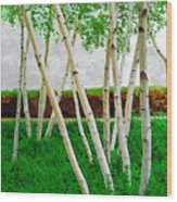 A Grove Of Birches 1 Wood Print