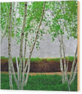 A Grove Of Birches 2 Wood Print