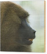 A Guinea Baboon At The Lincoln Wood Print