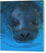 A Harbor Seal At The Lincoln Childrens Wood Print