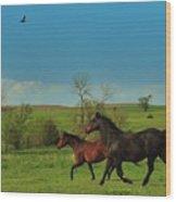 A Hawk And Horses In Kansas Wood Print